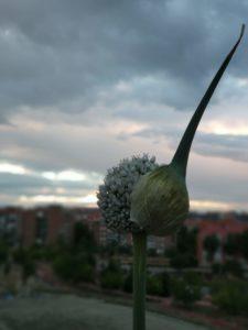 MILJIM- La belleza de lo pequeño